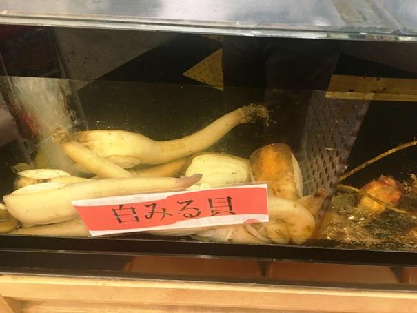 磯丸寿司の白みる貝